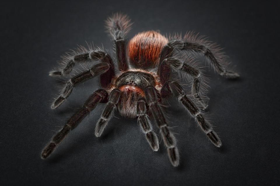 Las Arañas y el miedo a las arañas